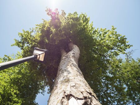 Black street lamp on the background of a large tree and sky bottom view up