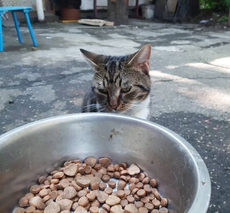 Yard cat sits and look sadly at dog bowl with food