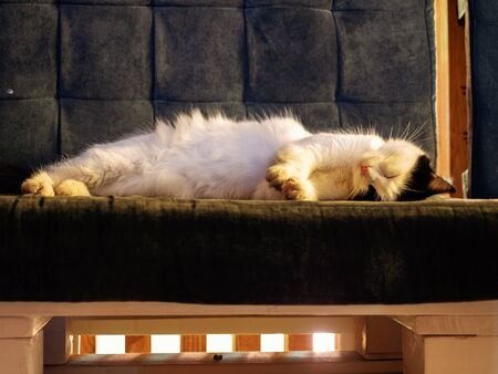 A white cat with black ears sleeps on velvet gray bench with wooden legs