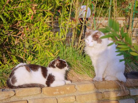 Two street cats sit and bask on salt tree against the backdrop of green bushes