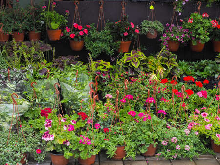 Many different flowers in pots stand on the street and are suspended on the wall. A flower stall. Street trade 版權商用圖片