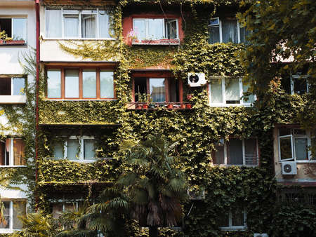 Typical old residential building with many windows and walls overgrown with ivy