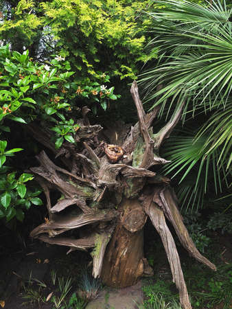 An ornamental dry stump with driftwood stands among bushes and palms. Roots in landscape design 版權商用圖片