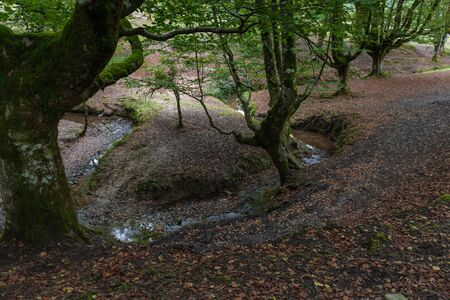 A little river forming almost a circle with some beech trees at the riverside at the Basque Country , Spain