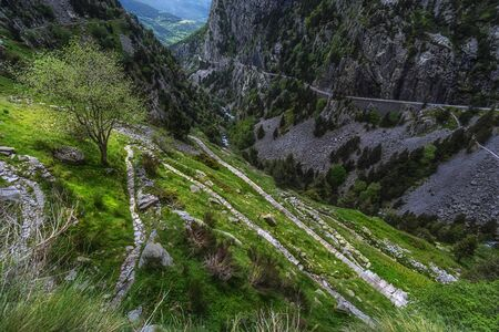 Stone path towards a tree surrounded by green foliage before a rocky mountain in Spain