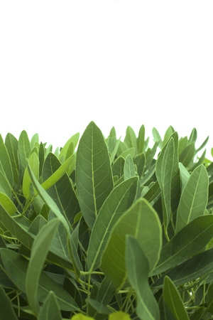 background.  leaves