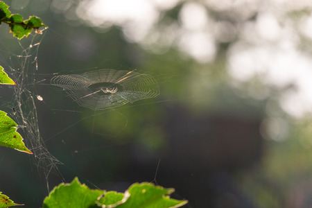 Spider catching the morning sun Stock Photo