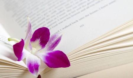 Close up of a pink orchid flower resting in the pages of a book Stock Photo - 10743112
