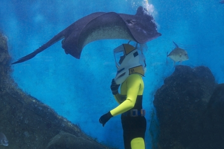 Shark swimming over a diver in the melbourne aquarium Stock Photo