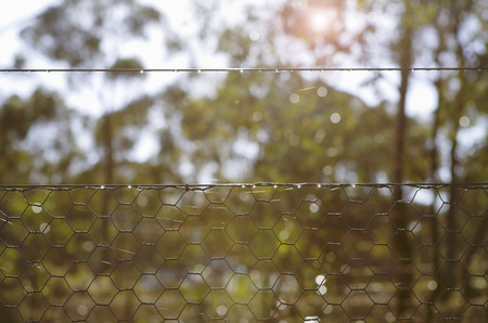 fencing wire: Backlit morning sunshine in bush setting looking through chicken wire fence Stock Photo