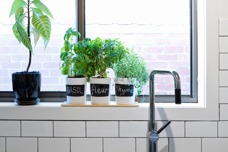 Pots of herbs on a contemporary kitchen window sill Stock Photo