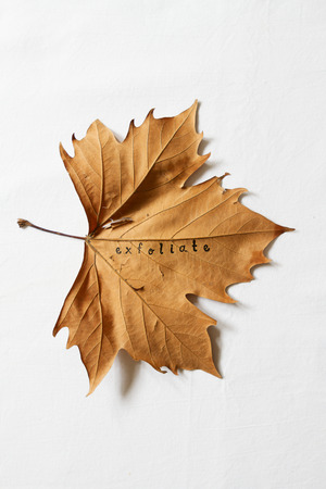exfoliate: Exfoliate word printed on dead autumn leaf to convey the concept of dry skin Stock Photo
