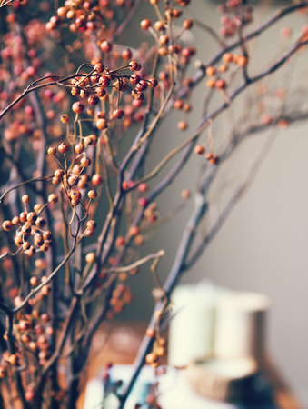 design interior: Close up of dried berry flowers in home interior setting Stock Photo