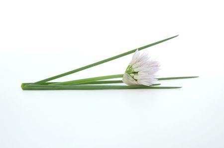 Fresh chives in a Zen composition against a white background