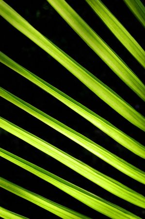 A green palm frond lit by the rising sun