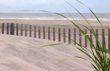 A view of the ocean framed by dune grass