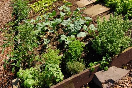 Een verhoogd bed biologische tuin met groenten en kruiden Stockfoto - 14151760