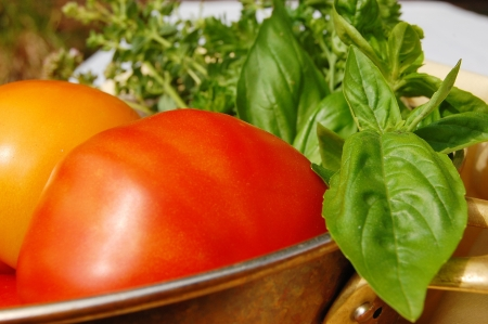 Red and yellow tomatoes and herbs just picked from the garden