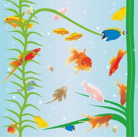 fish in the aquarium Vector