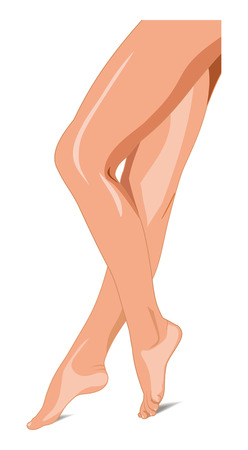 female legs: Illustration. Beautiful female legs vector