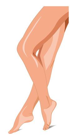 piernas de mujer: Ilustraci�n. Piernas femeninas Beautiful vector