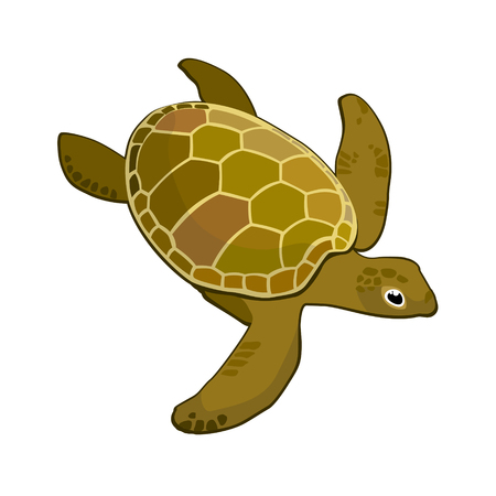 freshwater turtle: vector image of sea green turtle on a white background Illustration