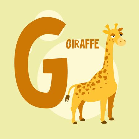 g giraffe: Funny orange giraffe on the background of the letter G.