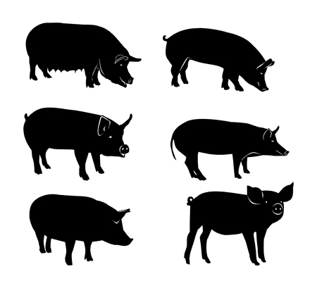 Set of black silhouettes of pig. Vector