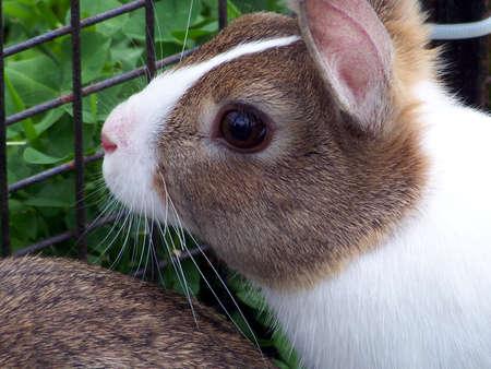 enclosures: Close up of rabbit in enclosure