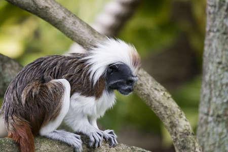 Ragtop monkey Фото со стока - 274809