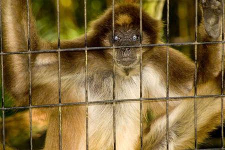 Monkey stare photo