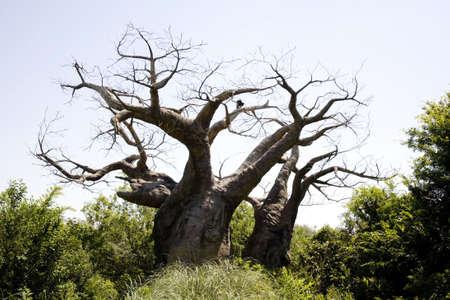 Upside down tree