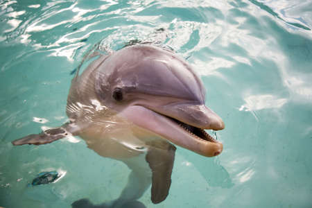 Bottle nosed porpoise Stock Photo