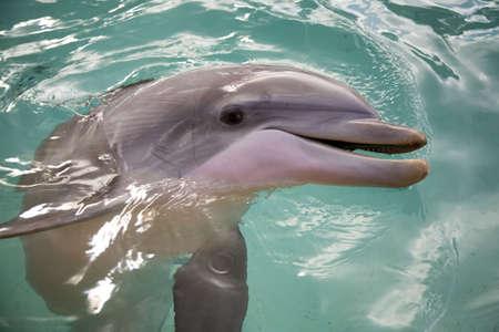 porpoise: Bottle nosed porpoise Stock Photo
