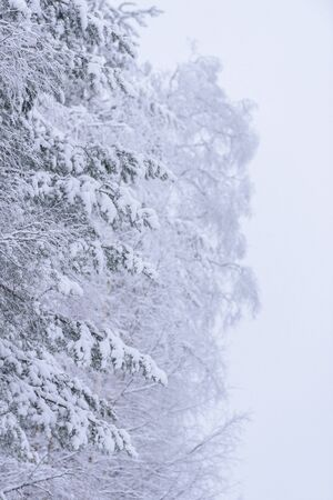 The forest has covered with heavy snow and bad weather sky in winter season at Lapland, Finland.