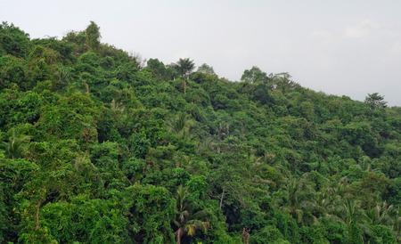 sfondo giungla: Sfondo della giungla Archivio Fotografico