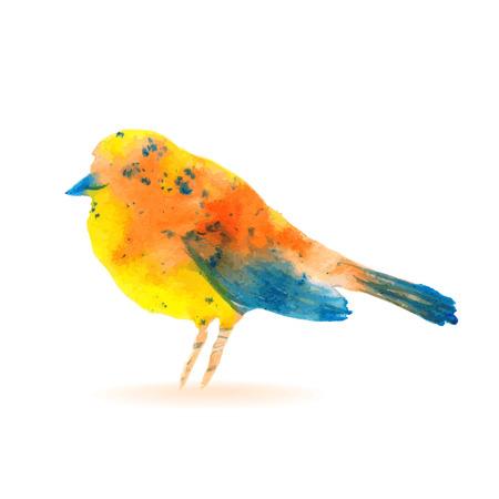 sparrow: Watercolor Bird Sparrow