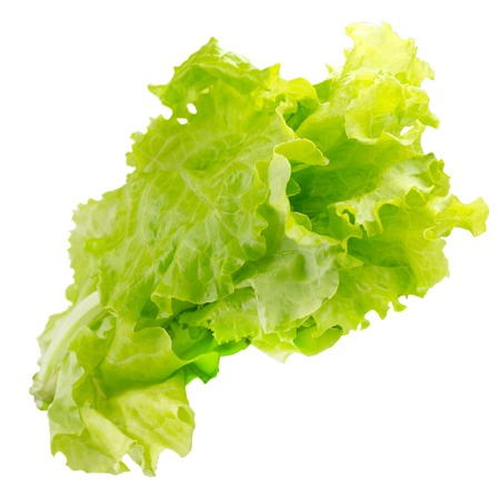 The Lettuce leaves on a white background Stock Photo