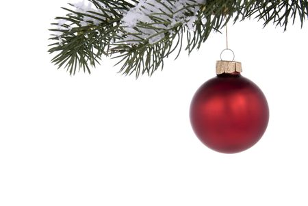 hangs: Red Christmas tree ornament hangs from a pine tree branch on a white background