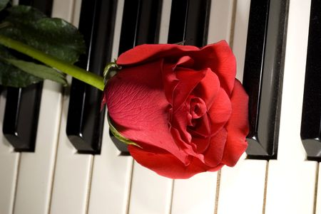Red rose rests on some piano keys during a wedding ceremony photo