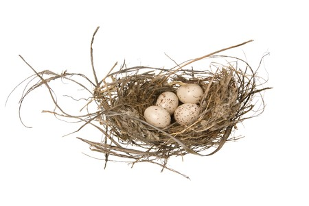 A birds nest with eggs isolated on a white background. 版權商用圖片 - 4369370