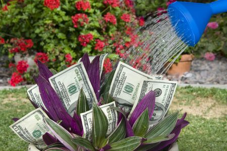 inference: A money plant being watered shows the conceptual inference for retirement savings or investment growth.