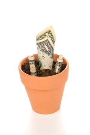 inferences: A clay flower pot with a newly blooming cash flower.  Good image for investment, retirement, savings inferences. Stock Photo