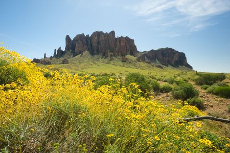 Yellow wildflowers bloom in front of Superstition Mountains desert.