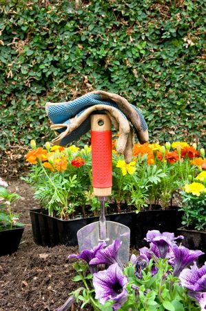 A pair of work gloves on top of a gardening shovel with colorful flowers in the background waiting to be planted. photo