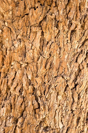 Close up of tree bark showing lots of detaail. photo