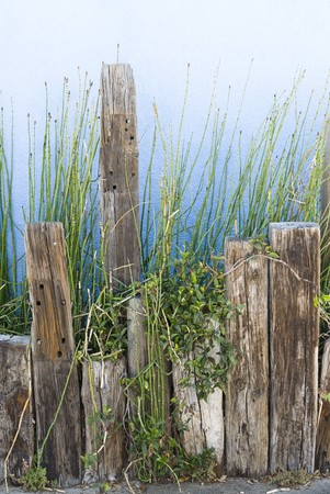 A planter of green shoots against a blue stucco wall supported by old wooden posts.  Image was shot along a coastline location and is classic waterfront decor. photo