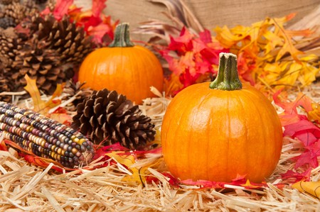 dried gourd: An Autumn holiday theme with pumpkins, corn, pine cones and autumn leaves on a hay base.
