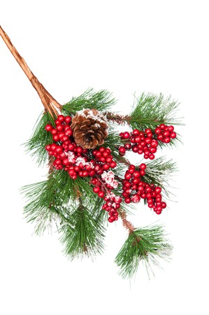 A pine tree branch covered with holly berries and snow and a pine cone.  Can be used as a design element or by itself with copy space.