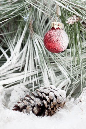 A frozen Christmas ornament hanging on a pine tree branch in the cold, white, snowy outdoor wilderness. photo